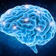 Mỗi ngày có 3000 tế bào não chết đi, làm sao để cải thiện trí nhớ?